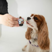 Green Roads Expanding CBD Offerings into Pet Arena