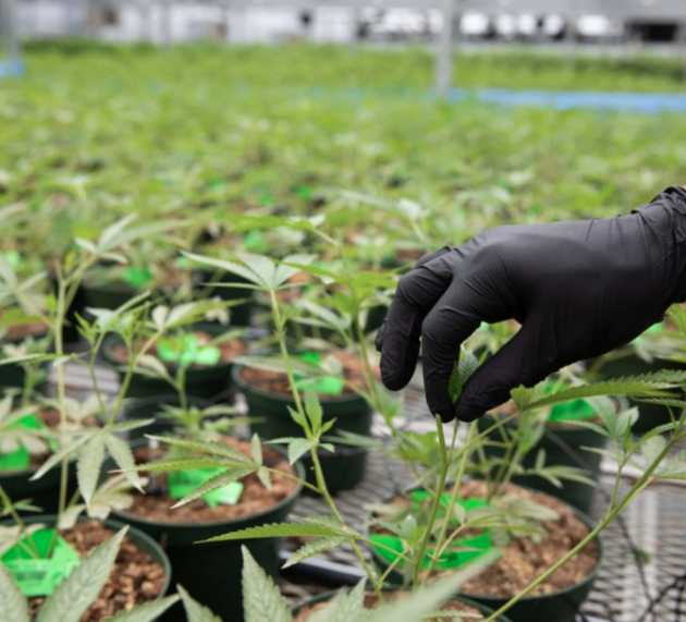 VidaCann, A Leading Provider of Medical Cannabis in Florida, Announces $25 Million Expansion of Operations to Include Over 600,000 Sq Ft of Cultivation Space, Adding Over 300 New Jobs